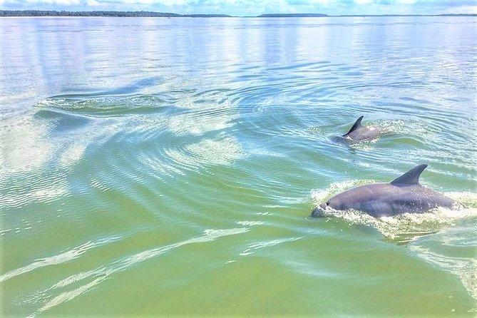 Hilton Head Island Dolphin Boat Cruise