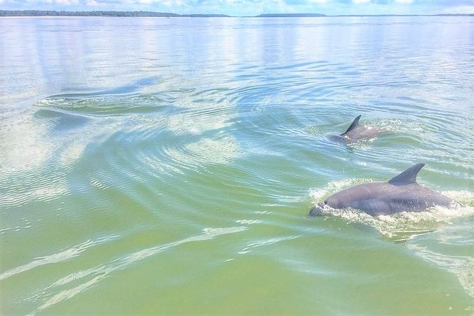 Private Dolphin Tour
