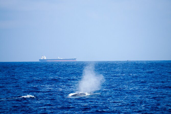 Kalpitiya Whale Watching Tour