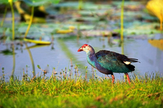 Bundala National Park Safari from Tangalle