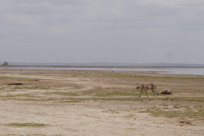 Day Safari Amboseli National Park