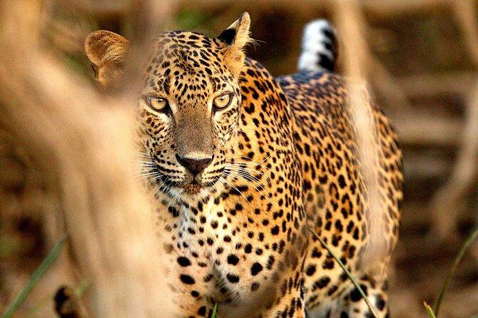Morning Wildlife Safari in Wilpattu National Park