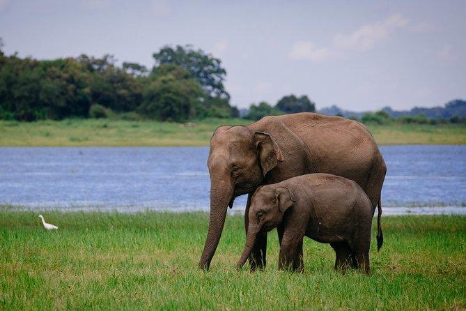 Kaudulla Elephant Safari - Afternoon