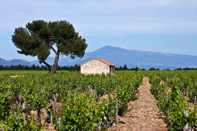 Wine Tasting in Provence