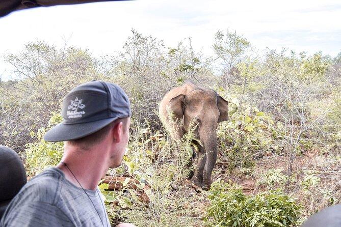 Udawalawe Elephant Safari - Afternoon