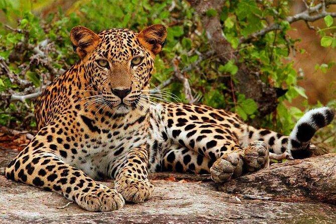 Yala National Park Safari from Hikkaduwa