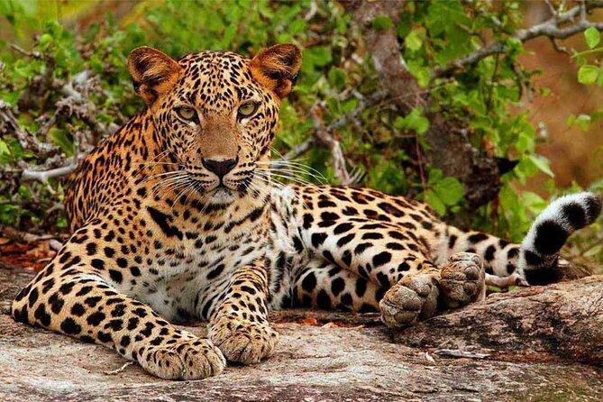 Bundala National Park Safari from Hikkaduwa
