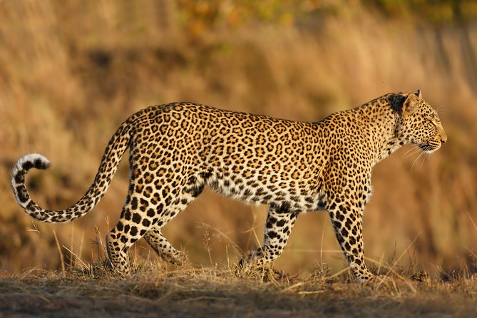 Yala National Park Evening Safari