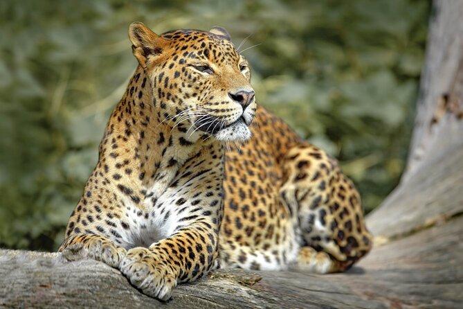 Wilpattu National Park Safari from Dambulla