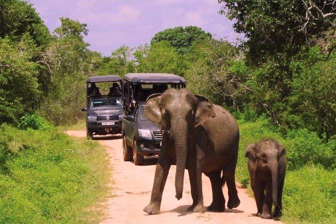 Yala National Park Evening Safari