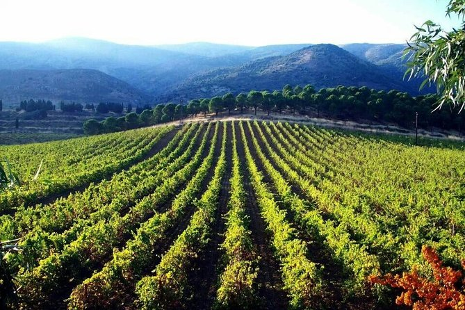 Private Full-Day Wine Tasting Tour with Lunch from Beirut