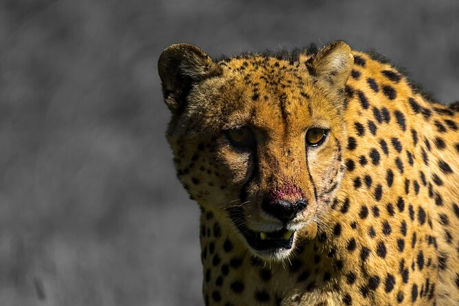 4 Day Addo to Karoo Safari