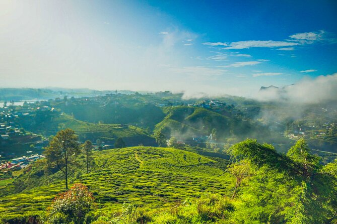 Hike to Single Tree Hill in Nuwara Eliya