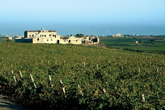 Historic winery visit with food and wine tasting in Marsala