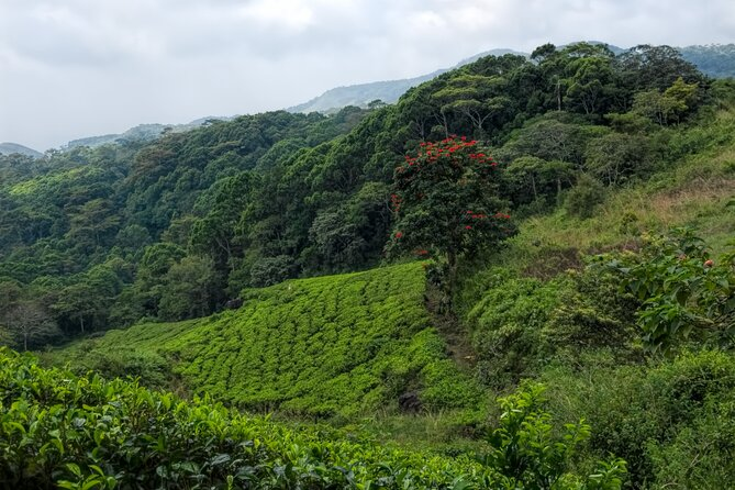 Treking / Bird Watching / Excursion at Sinharaja Rain Forest