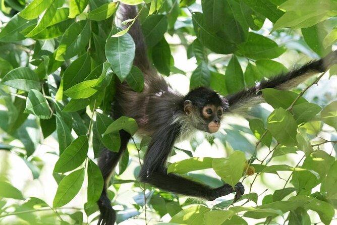 Punta Laguna Reserve on Private Tour