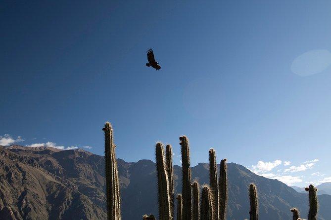 3-day Colca Canyon Trek Adventure
