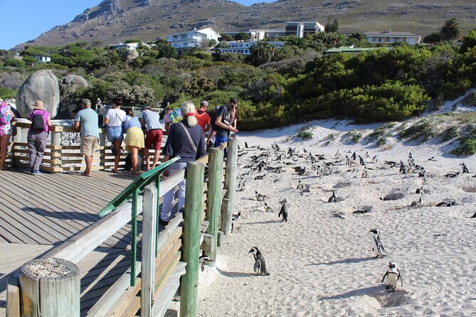 Full-Day Shared Tour of Cape of Good Hope Penguins From Cape Town