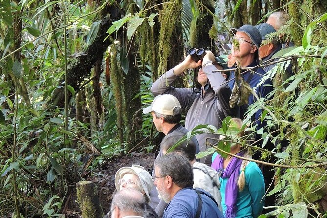2-Days Private Quito Birdwatching Tour