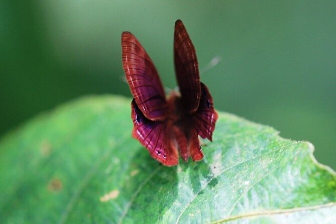 Private Half-Day Tour of Butterfly Sanctuary with Goan Meal