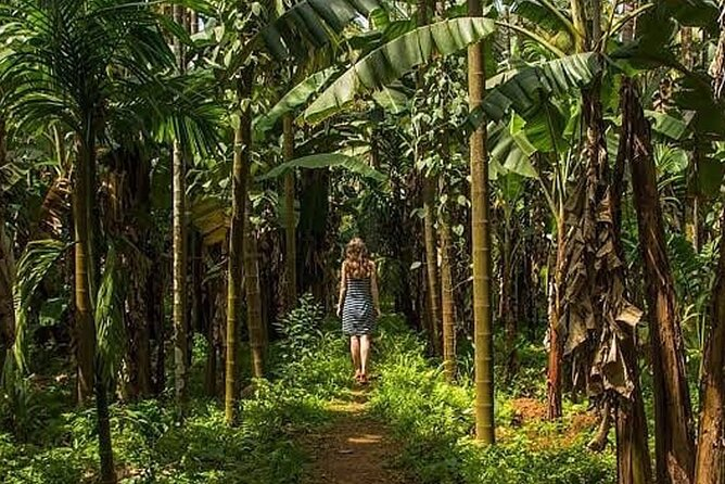 Private Tour of Butterfly Sanctuary and Spice Plantation