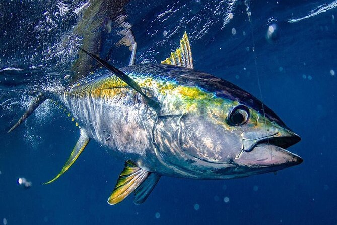 Private Bluefin Tuna Fishing in Villanova