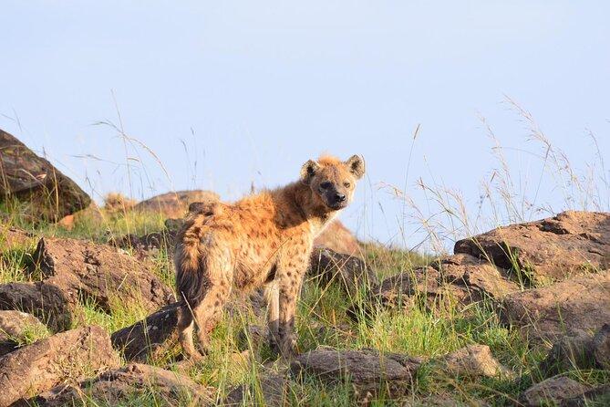 2 Days Trekking to Mt Kenya.