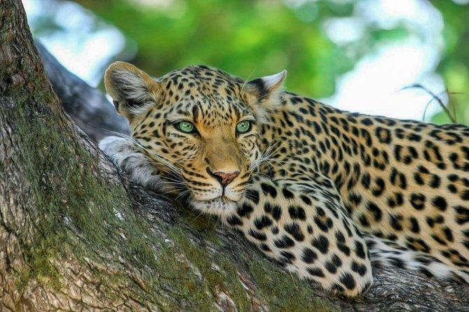 Wasgamuwa National Park Safari from Sigiriya