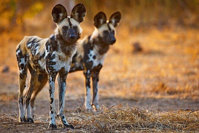 6-Day Tanzania Safari Tour with Pickup and Accommodation