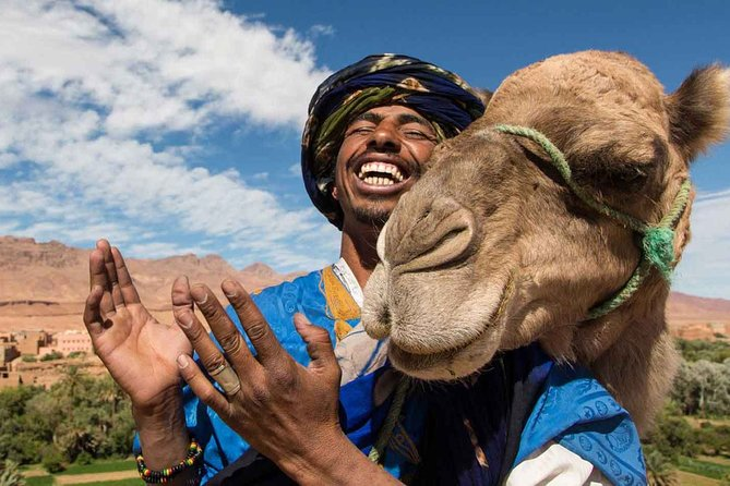 Marrakech Experience: PalmGrove Camel Ride Excursion