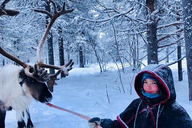 Full-Day Reindeer Tour with Pickup in Kiruna