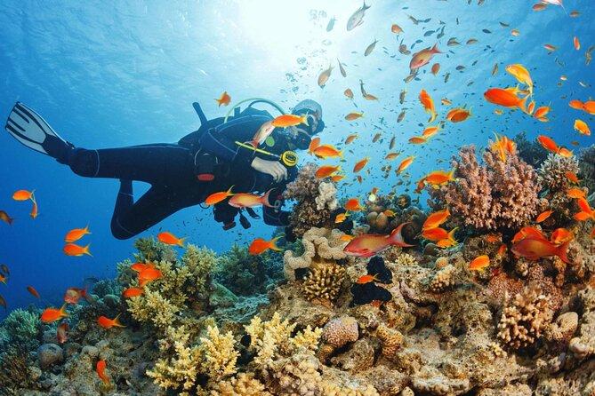 Scuba Diving in Zanzibar at Mnemba Island reef   Private Trip