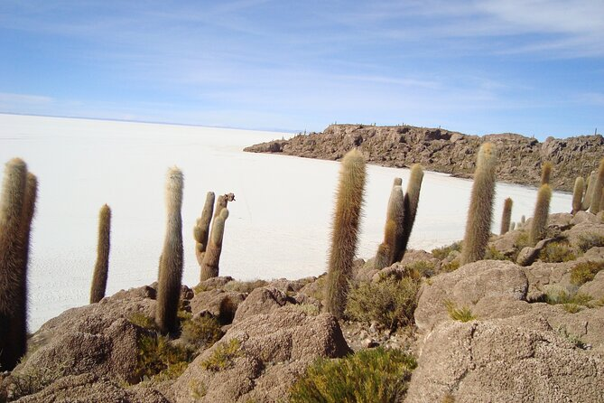 Private 3 Days tour Uyuni Salt Flats and Colorful Lagoons from Uyuni photo 9