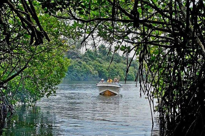 Madu River Boat Safari And Kosgoda Turtle Hatchery From Bentota