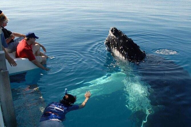 Mirissa Whale Watching Tour From Bentota