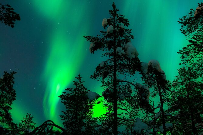 Aurora Hunting Tour and Reindeer Sledding from Kiruna