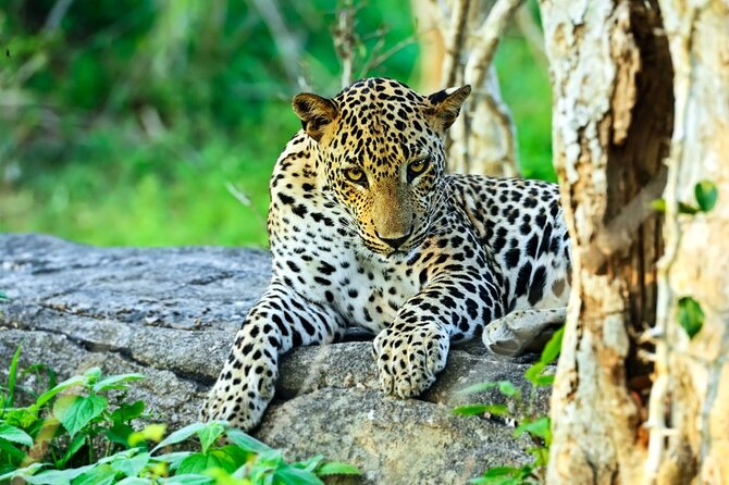 Yala National Park Safari Tour from Ella