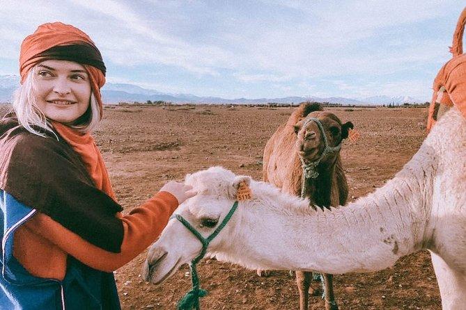 Atlas Mountains & Camel Ride Day Trip