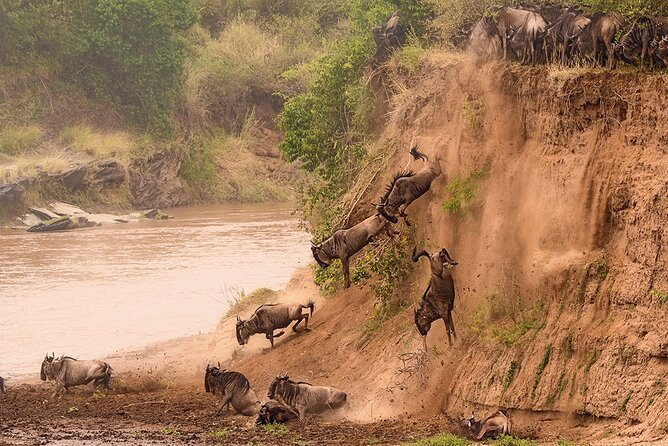 Small-Group 3-Day Tour to Maasai Mara Reserve from Nairobi