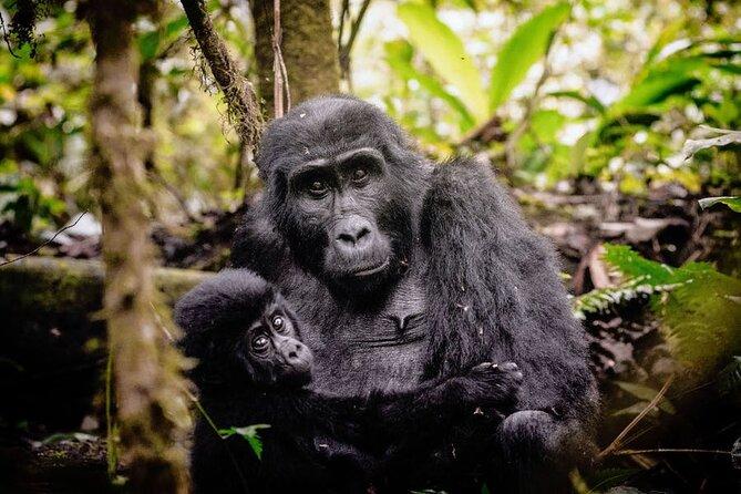 7 Days Uganda Gorilla and Wildlife safari