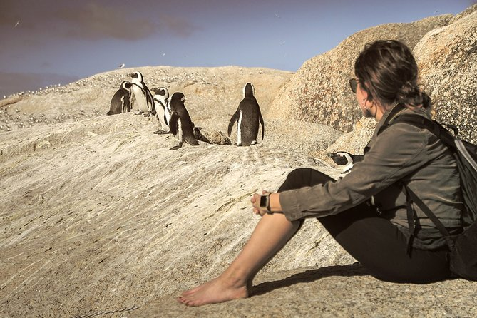 Cape Peninsula - Cape Point, Seals, Penguins - Full Day Private Tour