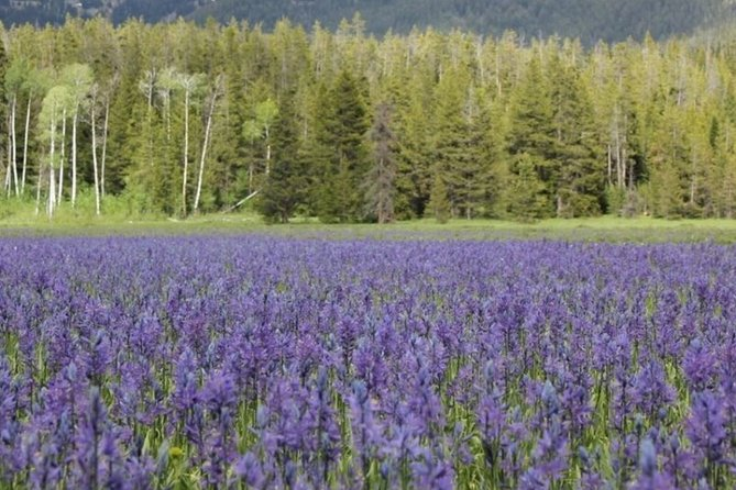 Grand Teton National Park Guided Tour From Jackson Hole