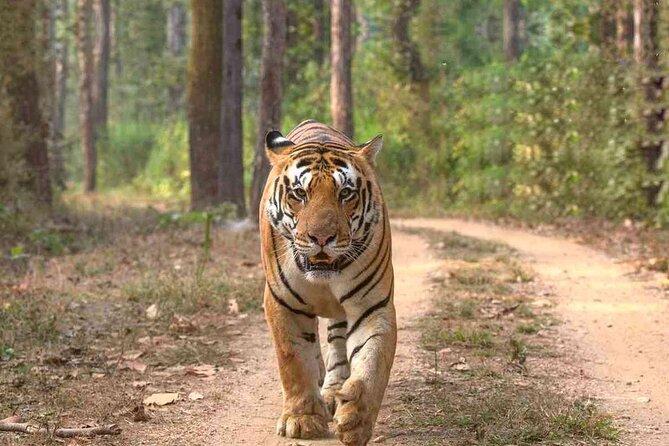 Full-Day Trip to Sariska National Park from Jaipur