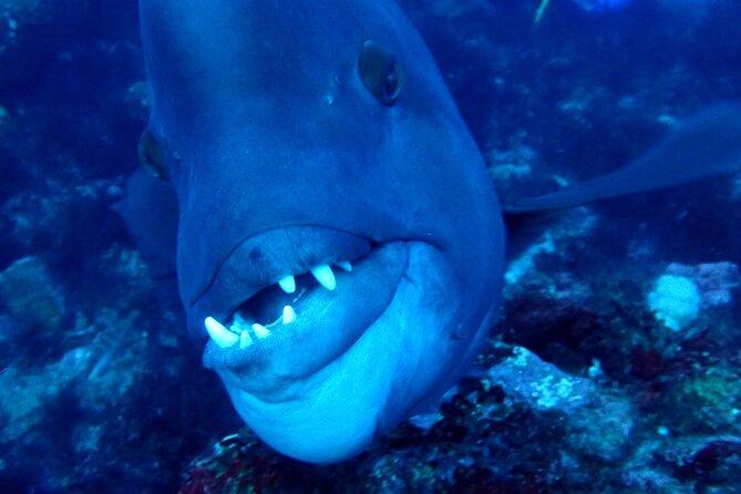 Let's enjoy Scuba diving in Izu Oceanic park Izu Peninsula for certificate Diver