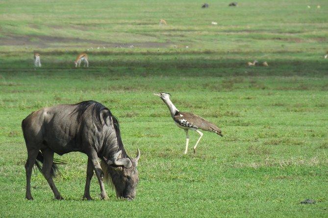 4 Nights Maasai Mara wildebeest migration special offer