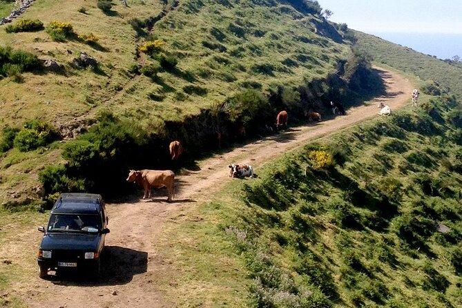 Jeep Tour Câmara de Lobos - Half day