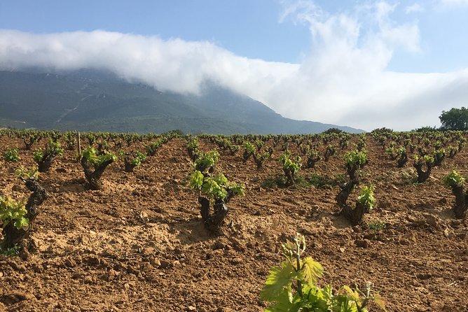 Rioja Alavesa: Kayak experience with wineries