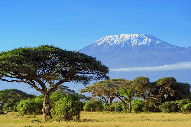 7-Day Private Machame Route Hiking Tour in Kilimanjaro