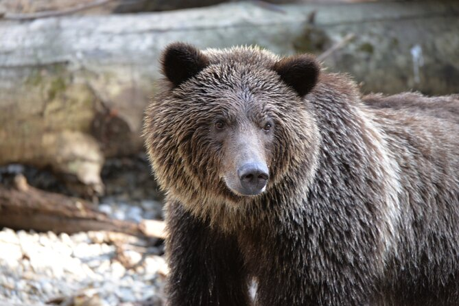 Great Bears of Bute: Grizzly Bear Viewing & Indigenous Cultural Tour