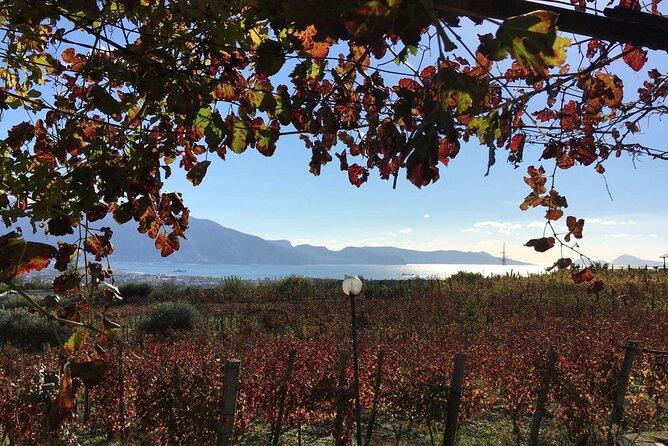 Pompeii, food and Wine